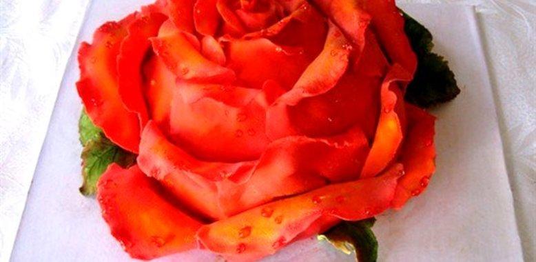 Торт роза фото